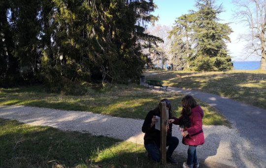 séquoia géant parc de la perle du lac