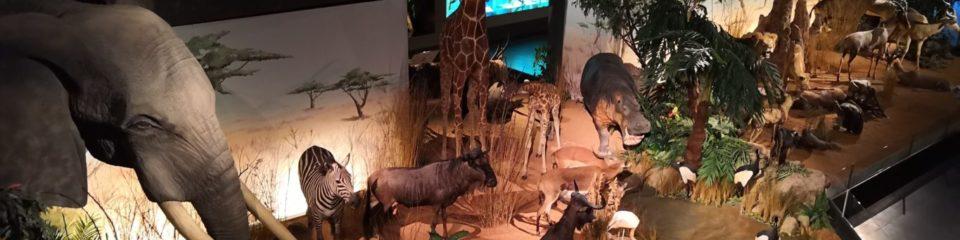 expo du muséum d'histoire naturelle de genève