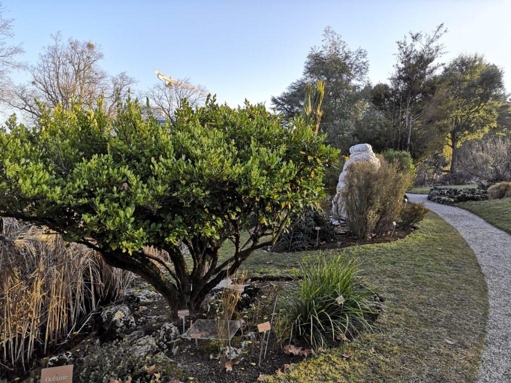 rocailles jardin botanique