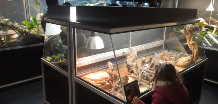 enfant au vivarium de meyrin genève