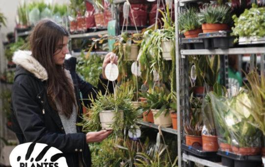 ventes de plantes à prix doux