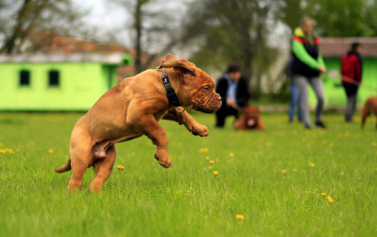 espaces pour chiens