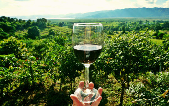 Léman dégustation vins