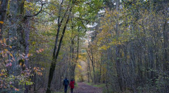 balade en forêt à genève
