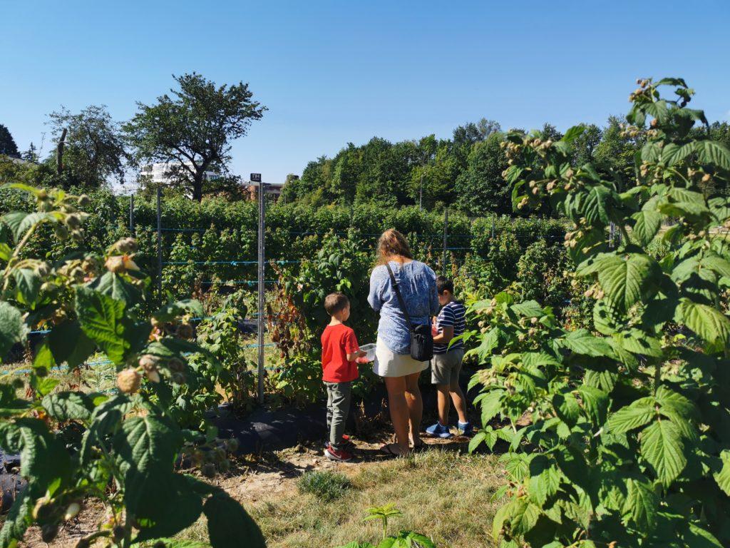 cueillette de fraises en famille genève