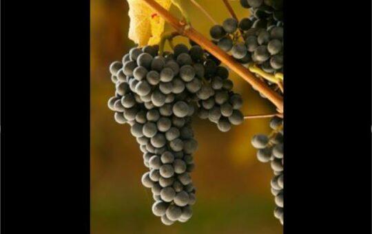conférence dégustation de vins