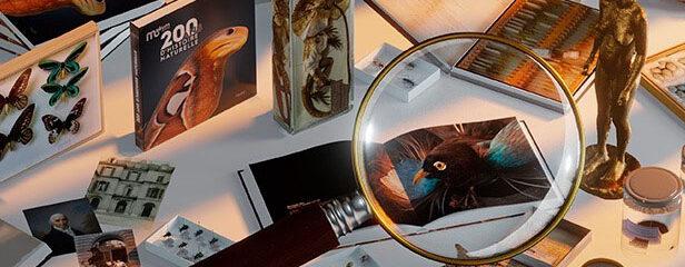 exposition trésors muséum genève
