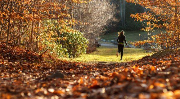 que faire automne geneve dix activites