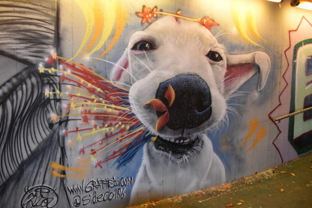 graffiti chien sur mur genève